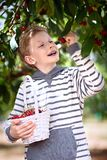 Kid picking berries Stock Photos