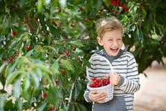 Kid picking berries Royalty Free Stock Image