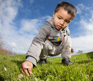 Kid picking Daisy Royalty Free Stock Images