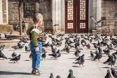 Kid and pigeons Royalty Free Stock Images