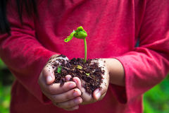 Kid is planting seed with complimentary color.  Royalty Free Stock Photo