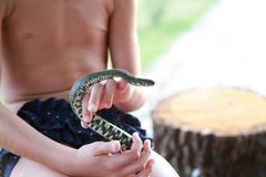 Kid playing outside, catching wild snake - holding Black Rat Snake, Red Milk Snake, Eastern Yellow Stock Photography