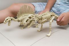 Kid playing a spinosaurus skeleton and tyrannosaurus skeleton on a sofa Royalty Free Stock Photo