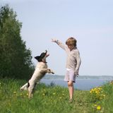 Kid plays with dog stock photos
