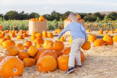Kid at pumpkin patch Stock Photos
