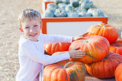 Kid at pumpkin patch Stock Photo