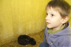 Kid and rabbit Stock Image