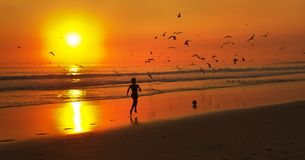 Kid running after a ball at the beach with an orange sunset and gulls Stock Photo