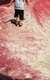 Kid running on red floor sand playground Royalty Free Stock Image