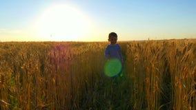 Kid runs around the wheat field against the sunset. stock video footage