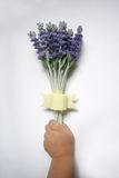 Kid's hand holding lavender. On white background stock photo