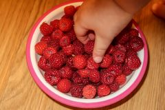 Kid`s hand over a bowl of raspberries royalty free stock images