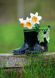 Kid's rain boots and flowers Stock Image