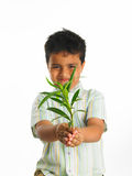 Kid with a sapling Royalty Free Stock Photography