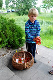Kid selling sweet cherries Stock Photos