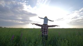 Kid sits on parent shoulders walking on meadow and play airplane with arms raised on rapeseed field on background sky in. Kid sits on parent shoulders during stock video