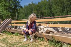 Free Kid Sitting On Fence At Farm And Looking Royalty Free Stock Photo - 129063185