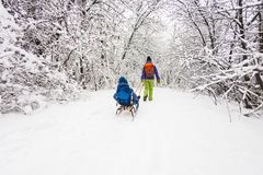 Kid on the sleigh. A women is carrying a child on a sled. Mom walks with her son over the snow-covered forest. Cheerful winter vacation. Winter fun. Baby on the Royalty Free Stock Photos