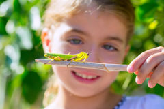 Kid small girl looking praying mantis. Scientific naturalist biologist kid girl looking praying mantis insect closeup stock photography