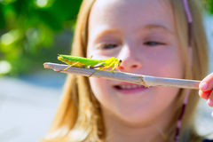 Kid small girl looking praying mantis Royalty Free Stock Images