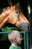 Kid Smiling And Horse Royalty Free Stock Image