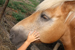 Kid Stroke Reassuring Horse Love Shelter Royalty Free Stock Photos