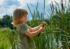 Kid in summer Royalty Free Stock Photography