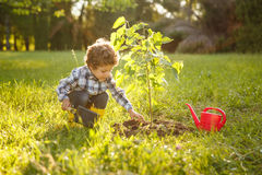 Kid taking care of tree in garden Stock Image