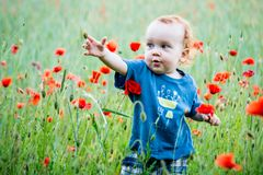 Kid toddler in a field of poppies royalty free stock image