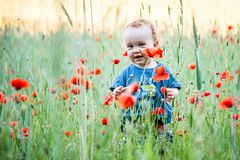 Kid toddler in a field of poppies stock photography