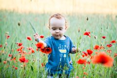 Kid toddler in wild field of poppies stock images