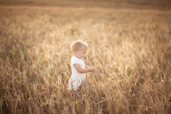 Kid toddler on wheat field at sunset, lifestyle Stock Images