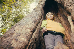 Kid in tree hole Royalty Free Stock Images