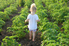 Kid in vegetable garden Stock Images