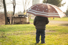 Kid in village watching playful dogs holding umbrella Royalty Free Stock Images