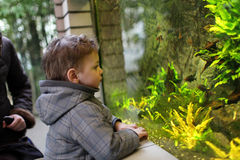 Kid watching fishes Stock Photos
