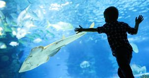 Kid watching the shoal of fish swimming in oceanarium royalty free stock photography