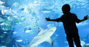 Kid watching the shoal of fish swimming in oceanarium. Little boy, kid watching the shoal of fish swimming in oceanarium Royalty Free Stock Photography