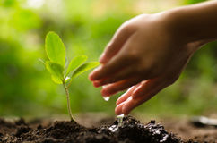 Kid watering young tree over green background Royalty Free Stock Photos