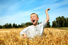 Kid in wheat field Royalty Free Stock Photos