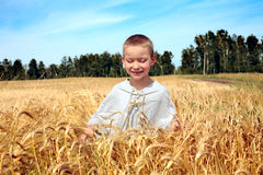 Kid in wheat field Stock Photo