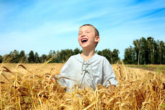 Kid in wheat field Royalty Free Stock Image