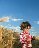 Kid in wheat field. Little child in a wheat field Royalty Free Stock Photography