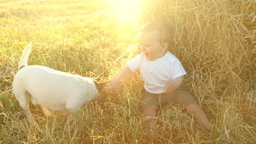 Kid in the white shirt plays with a dog in a haystack in a field stock video footage