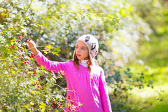 Kid winter girl picking berries in the forest Royalty Free Stock Photography