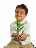 Kid With Sapling Royalty Free Stock Photos