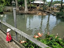 Kid in a zoo. Young toddler watching flamingos in a zoo royalty free stock photo