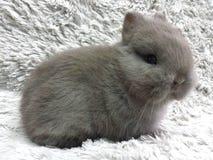 Kiddo do coelho Foto de Stock Royalty Free