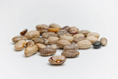Kidney bean royalty free stock photo