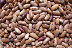 Kidney bean Royalty Free Stock Image